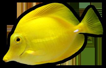 Coral Reef Aquatics Equipment Protein Skimmers